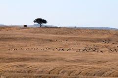 Il Portogallo. Alantejo. Fotografia Stock