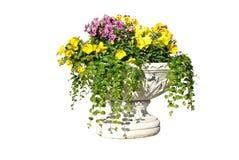 Il POT bianco con i fiori gialli, dentellare e viola Fotografia Stock