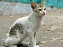 Il povero gatto Fotografie Stock Libere da Diritti