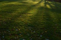 Il prato del parco con ombra sulla terra Fotografie Stock