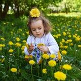 Il prato della bambina riunisce il dente di leone giallo immagini stock