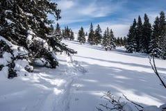Il prato della montagna dell'inverno con gli alberi e le racchette da neve fa un passo Fotografia Stock