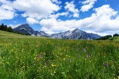Il prato di fioritura fiorisce nel tempo di primavera con cielo blu ed i cumuli nelle alpi austriache Fotografia Stock