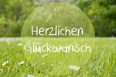 Il prato di Gras, Daisy Flowers, Herzlichen Glueckwunsch significa le congratulazioni Fotografie Stock Libere da Diritti