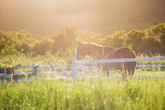 Il prato e le erbe verdi con la mattina inumidiscono a priorità alta ed ai cavalli in stalla come fondo Fotografie Stock