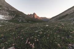 Il prato ed il pascolo alpini hanno messo in mezzo della catena montuosa di elevata altitudine ai tramonti Le alpi italiane, dest Fotografia Stock Libera da Diritti