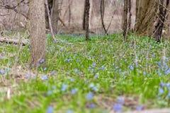 Il prato fiorisce l'umore della foresta degli alberi pacifico fotografie stock libere da diritti