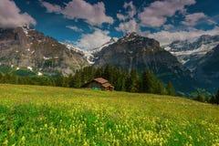 Il prato fiorisce nel comune di Grindelwald, Svizzera Immagine Stock