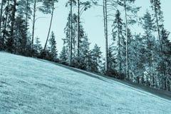 Il prato inglese del pendio ed il legno nel blu di distanza tonificano Fotografia Stock Libera da Diritti