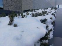Il prato inglese sotto la neve nella parte centrale della città di Ekaterinburg in Russia fotografia stock