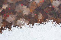 Il primo gelo lascia le bacche Fotografia Stock
