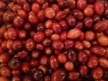 Il primo piano dei mirtilli rossi rossi freschi, ottiene i vostri antiossidanti fotografie stock