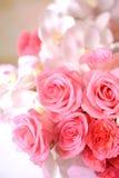 Il primo piano del colore rosa è aumentato Immagini Stock