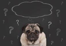 Il primo piano del cucciolo di cane del carlino che si siedono davanti al segno della lavagna con i punti interrogativi ed il pen Fotografie Stock