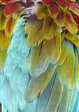 Il primo piano del Macaw mette le piume a (priorità bassa) Immagini Stock
