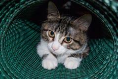 Il primo piano del muso di un gatto del cucciolo in una rete di plastica ha rotolato la u immagini stock