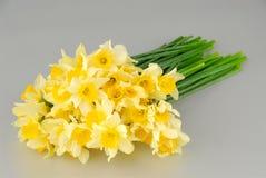 Il primo piano del narciso bianco fiorisce, conosciuto come Paperwhite, papyraceus del narciso nel campo di erba verde immagini stock libere da diritti