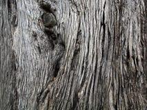 Il primo piano della corteccia di albero marrone con lungo crackly allinea Immagini Stock Libere da Diritti