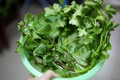Il primo piano delle verdure con colore verde è una sostanza importante, aiuti della clorofilla ridurre il rischio di cancro immagine stock
