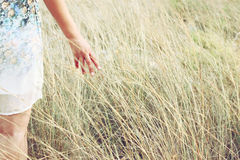 Il primo piano di una donna passa l'erba alta commovente nel campo Fuoco selettivo Immagini Stock Libere da Diritti