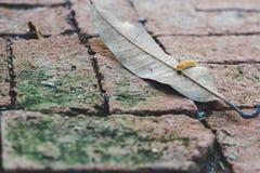 Il primo piano su una lumaca cammina sopra la foglia secca fotografie stock