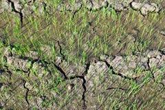 Il primo punto fa l'azienda agricola del riso fotografia stock libera da diritti
