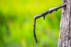Il problema della gomma para che spilla durante la stagione delle pioggie Tapp Fotografia Stock Libera da Diritti