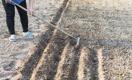 Il processo di piantatura dei semi di verdure Fotografie Stock Libere da Diritti