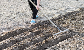 Il processo di piantatura dei semi di verdure Immagine Stock Libera da Diritti