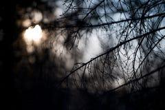 Il profilo degli alberi alla notte e la luce della luna Fotografia Stock Libera da Diritti