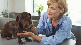 Il proprietario sta parlando con cane stock footage
