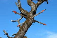 Il puntatore di legno all'albero Immagini Stock
