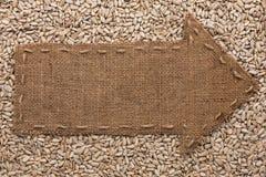 Il puntatore di tela da imballaggio si trova sui semi di girasole Fotografia Stock