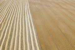 Il punto di vista areale del raccolto sistema nel giorno di estate soleggiato Raccolto del grano Immagine Stock Libera da Diritti