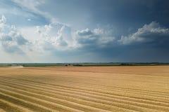 Il punto di vista areale del raccolto sistema nel giorno di estate soleggiato Raccolto del grano Fotografia Stock Libera da Diritti