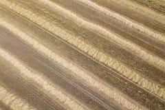 Il punto di vista areale del raccolto sistema nel giorno di estate soleggiato Raccolto del grano Fotografie Stock