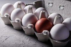 Il punto di vista del primo piano del pollo crudo eggs in scatola delle uova su fondo bianco Immagine Stock Libera da Diritti