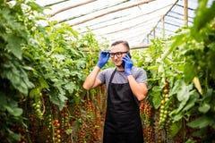 Il punto di vista di un agricoltore attraente in una serra con il pomodoro parla Fotografia Stock