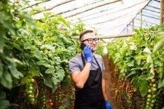 Il punto di vista di un agricoltore attraente in una serra con il pomodoro parla Fotografia Stock Libera da Diritti