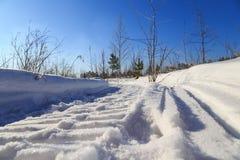 Il punto di vista ha curvato il percorso nella neve nelle piantine della foresta Fotografia Stock