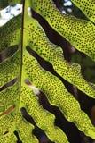Il punto sulla foglia verde Fotografia Stock