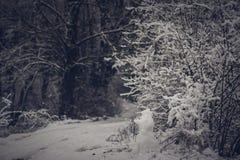 Il pupazzo di neve è guardia della foresta Fotografia Stock Libera da Diritti