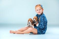 Il puppie cani da lepre di due e della ragazza felice su fondo grigio Fotografia Stock