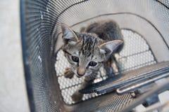 Il pussycat nel canestro della bicicletta Immagine Stock Libera da Diritti