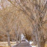 Il quadrato della pagina ha pavimentato la strada in mezzo di terreno nevoso ed erboso allineato con gli alberi marroni torreggia fotografie stock libere da diritti