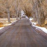 Il quadrato ha pavimentato la strada in mezzo di terreno nevoso ed erboso allineato con gli alberi marroni torreggianti immagine stock
