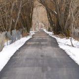 Il quadrato lungamente ha pavimentato la strada sotto un baldacchino degli alberi sfrondati elevantesi nell'inverno fotografie stock