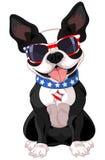 il quarto luglio Boston Terrier Fotografia Stock