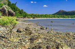 Il Queensland tropicale Fotografia Stock Libera da Diritti
