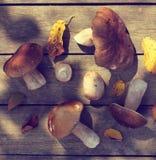 Il raccolto appetitoso della natura naturale per i piatti deliziosi Fotografia Stock Libera da Diritti